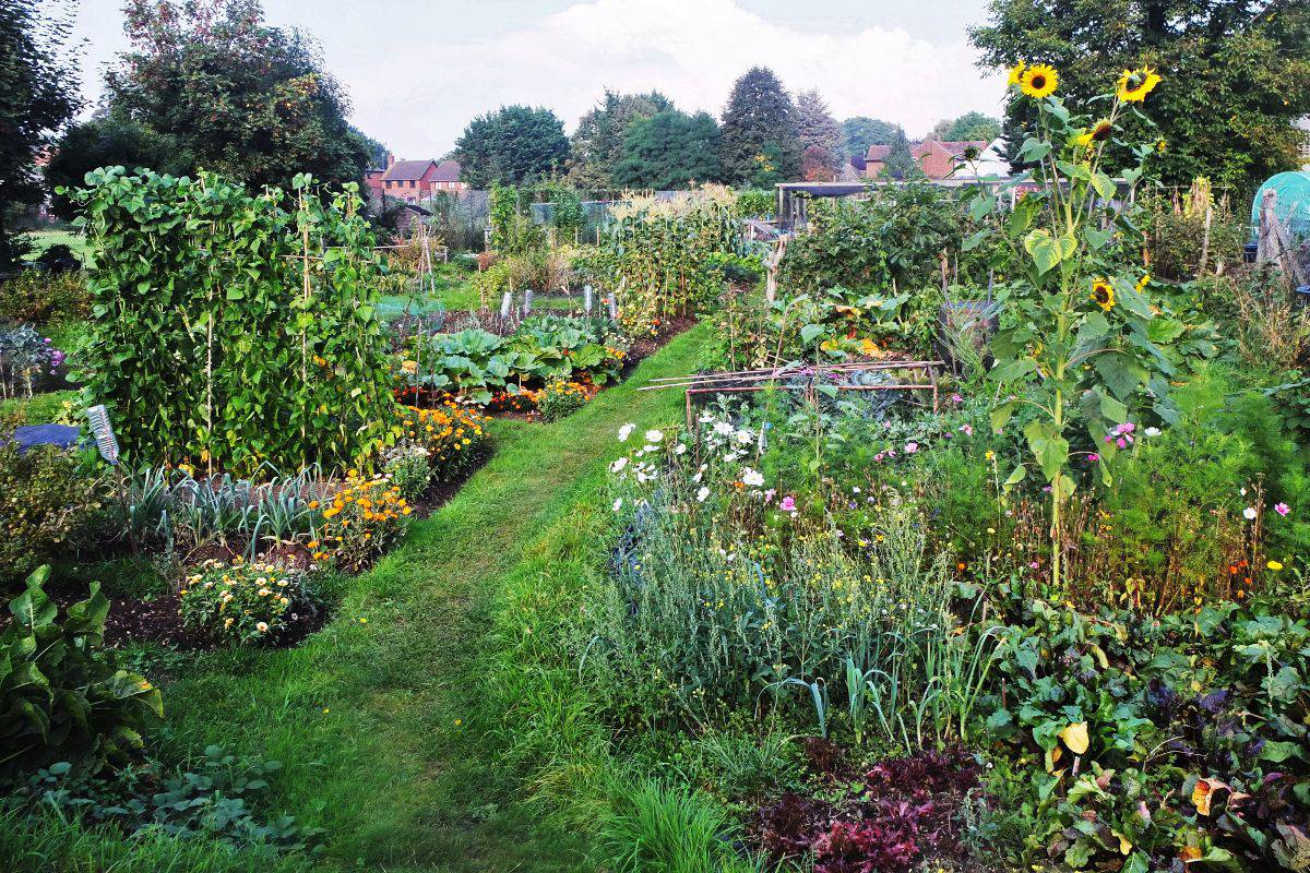 Twyford London Road Allotments