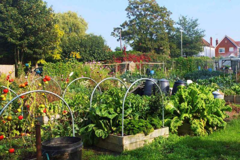 London Road Allotments in Twyford Berkshire