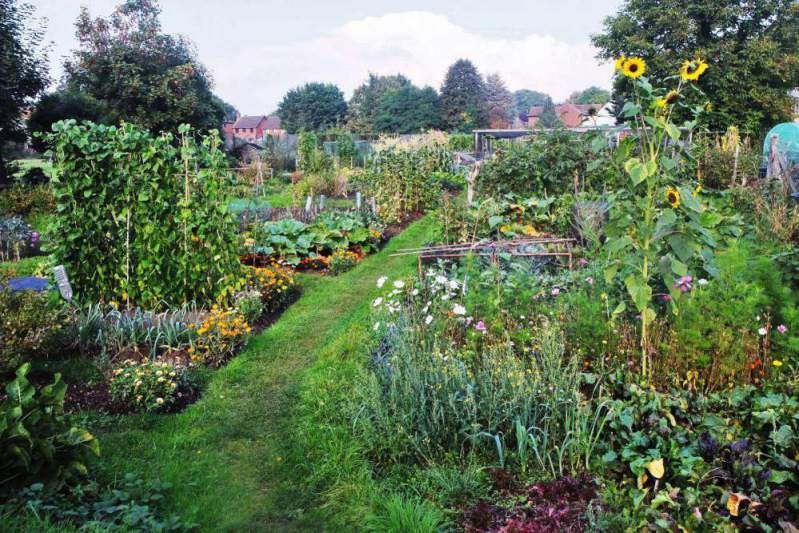 Twyford - London Road Allotments